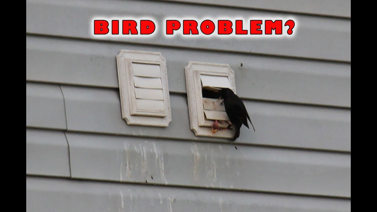 Dryer Vent Bird Guard Dryer Vent Bird Stop Youtube