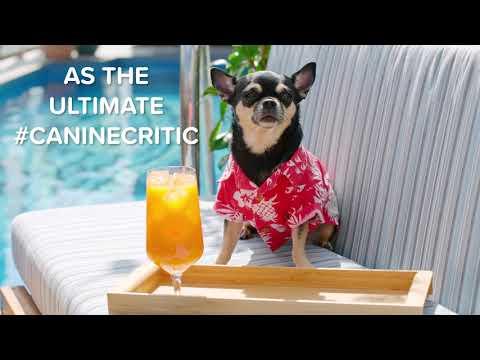Jim Show - Want A Job As A Dog Hotel Critic?!?