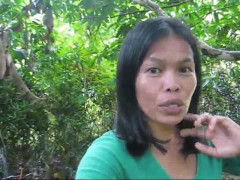 Marife Roams Around The Yard Down To The Well And A Thank You A BlindOwl Outdoors Expat Philippines