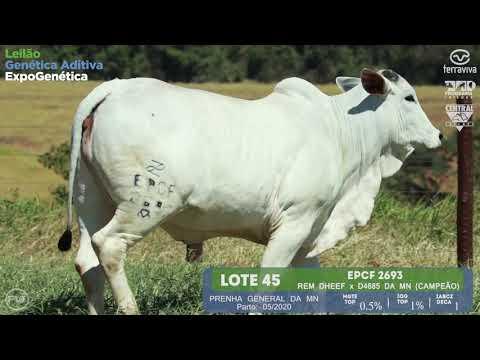 LOTE 45 - Leilão Genética Aditiva ExpoGenética 2019