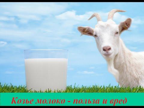 Козье молоко - полезные свойства