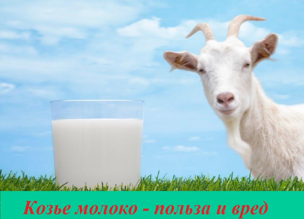 фото козье молоко