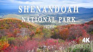 Visit Shenandoah National Park, Virginia | Fall Foliage 2020 in 4K
