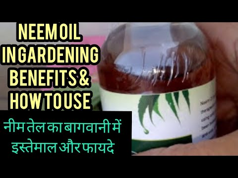 How To Use Neem Oil To Remove Insects And Paste