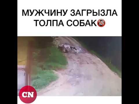 нападение собак на человека   никто не помог