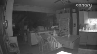 Great Dane sees Ghost Orbs caught on security camera