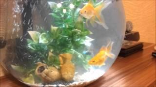 Наш аквариум(, 2011-10-23T19:38:04.000Z)