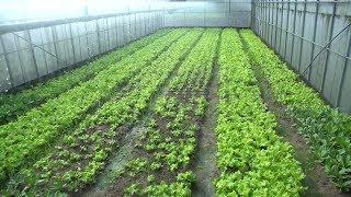 新北經驗15.《有機午餐,翻轉台灣農業》Promoting Organic Agriculture with School Lunch《 thumbnail