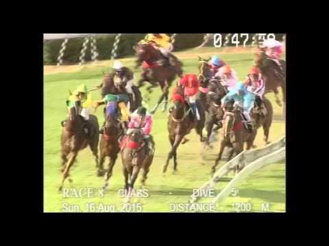 ม้าแข่งสนามฝรั่ง วันอาทิตย์ที่ 16 สิงหาคม 2558 เที่ยว 8 ม้าชั้น 5