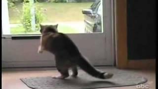 Весёлые кошки