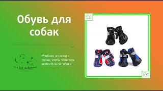 Обувь для собак из кожи и ткани - ВСЕ ДЛЯ ЖИВОТНЫХ