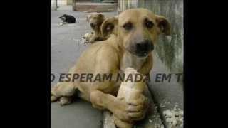 AMOR DE CÃO (EMOCIONANTE)