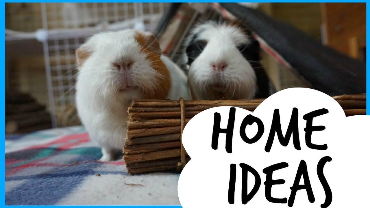 Guinea Pig Home Ideas My Setups