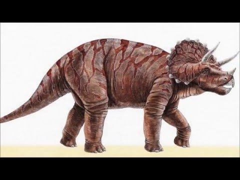 Dinosaur Illustrations - SlideShow With Relaxing Classical Music