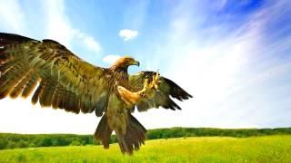 Слайд Шоу — Хищные птицы планеты.