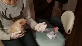 как самостоятельно сделать прививку щенку? Чего надо остерегаться ?
