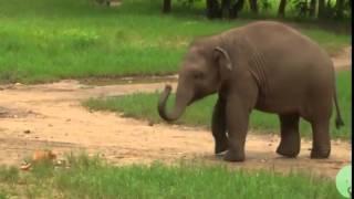 When Baby Elephant Meet A Cat