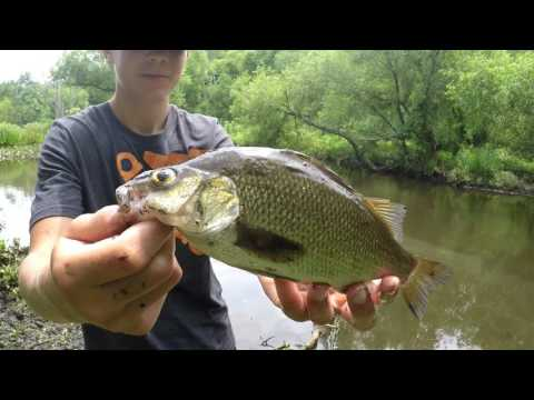 Fishing In Stream And At Newton Lake NJ ( Nice Bass Caught )