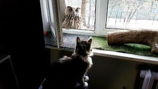 Апрельские котики и совушки на солнышке
