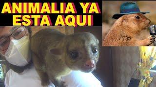 😁los increíbles animales de Tonatiuh, Animalia ya esta cerca😁