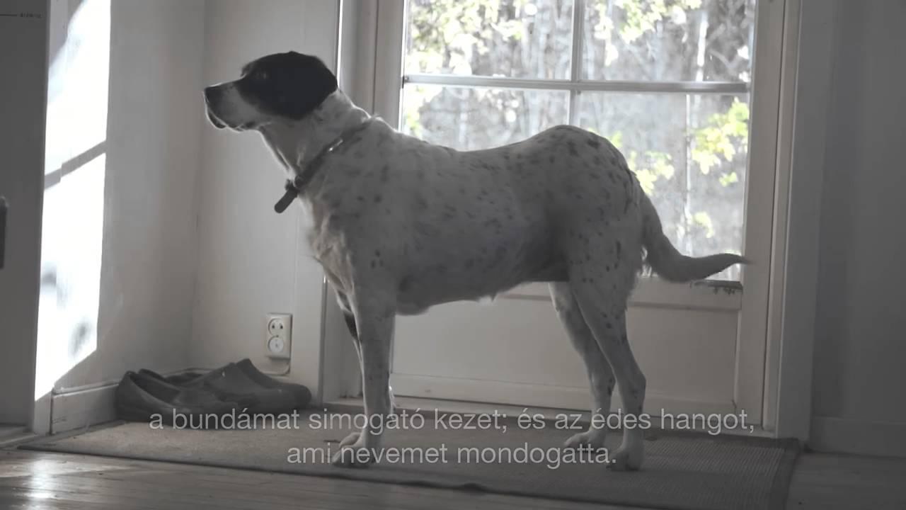 Egy kutya bakancslistája - Négylábú társam igaz története