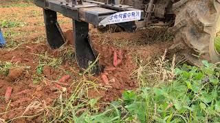 고구마수확기, 태창농기…