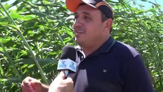 Iguatu - Hildernando Barreto Secretário de Agricultura aprova o Dia de Campo Betânia