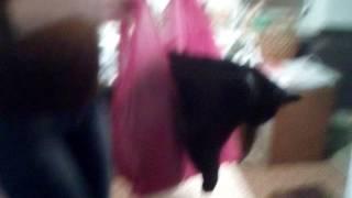 Сходил в магазин.Кошка -со мной)))