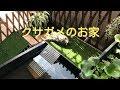 クサガメの飼育環境~ベランダ飼育~ の動画、YouTube動画。