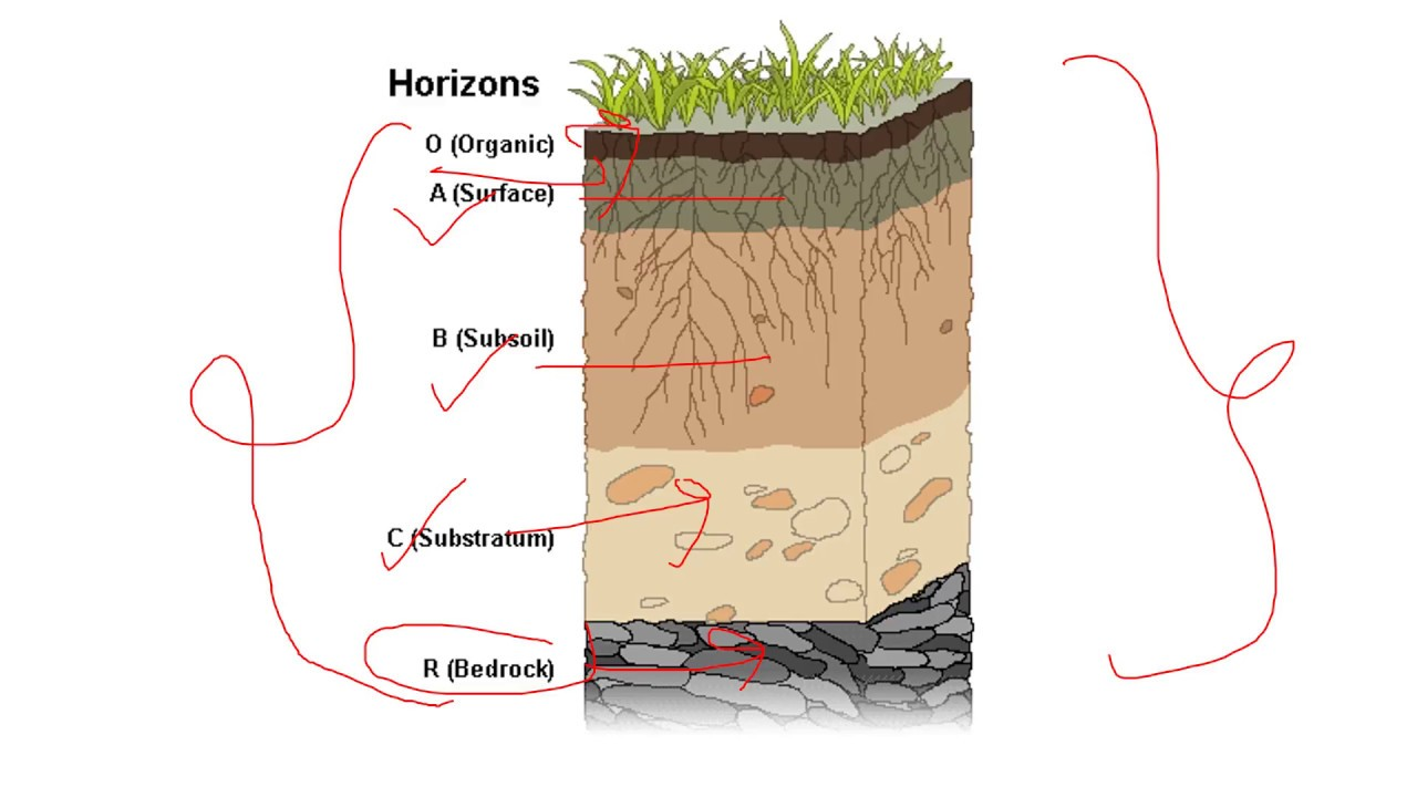 Development of soil profile and soil horizons youtube for Soil profile video