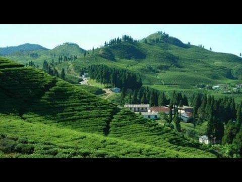 Darjeeling Tour West Bengal India (দার্জিলিং ট্যুর), Part-13