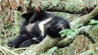 《黑熊來了》20秒短版電影預告|12/13 尋找山的靈魂