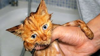 Gatito Abandonado