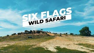 """疫情下「衝出紐約」🐻🐯🦁🐵🦓🦙🐘🦒🦘🦌 一齊揸車去六旗畀動物睇 太激動 老虎獅子""""傻傻分不清"""" Six Flags Wild Safari Drive-thru Adventure"""