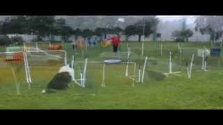 Nadac Hoopers-agility: Workshop - Seminar Hsv Underdogs Eislingen