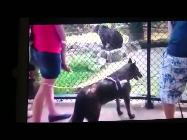Ouwehands dierenpark