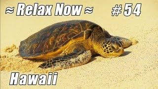 SEA TURTLE Mahaiula Beach HAWAII: #54 Beaches Ocean Waves HD Kona Coast KEKAHA KAI State Park