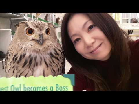 Many Cute and Beautiful Owls at Owl Cafes in Japan!