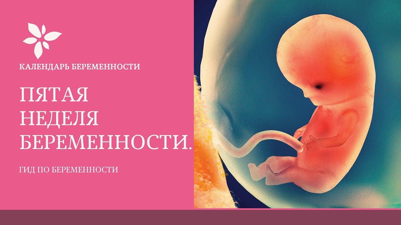 5 неделя беременности похудела