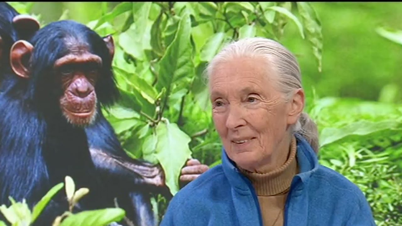 the amazing life of jane goodall the famous biologist