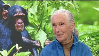 Icon: The Life of Jane Goodall