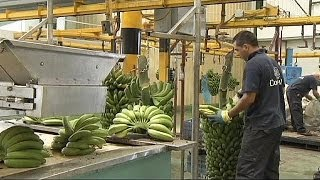 Top Banana As Fyffes And Chiquita Merge - Economy