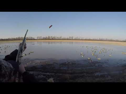 Mississippi Delta Duck Hunting