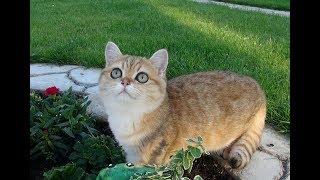 Маленькая тигрица в садовых
