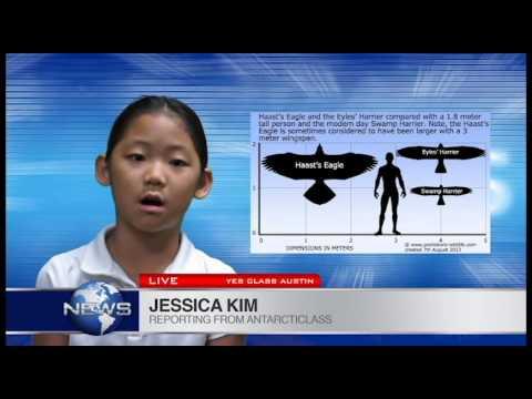Haast Eagle By Jessica Kim