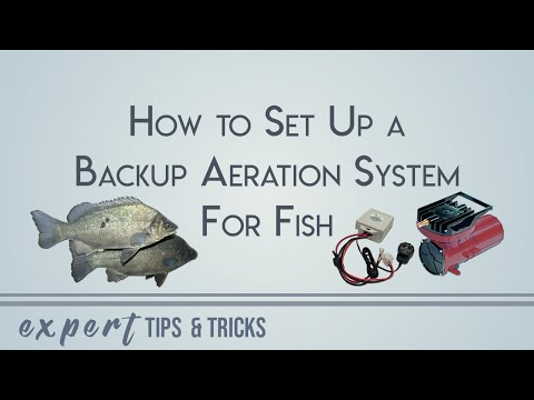 How To Set Up A Back Up Aeration System For Fish