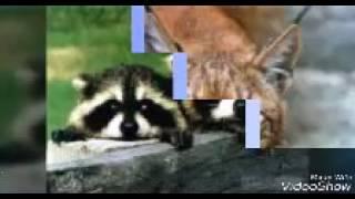Подборка картинок животных и еды