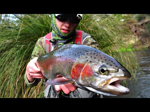 Fly Fishing In Taupo, New Zealand For BIG Rainbow Trout