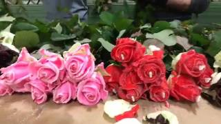 Самые красивые букеты из самых красивых роз)(, 2017-02-17T21:09:51.000Z)