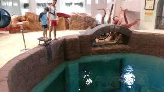 캐리비안베이 실내 다이빙 풀 - Diving pool in Caribbean Bay - EVERLAND KOREA
